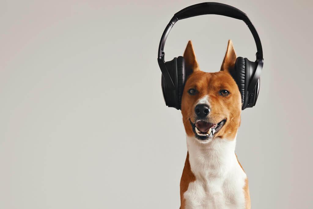Sonidos que relajan a los perro